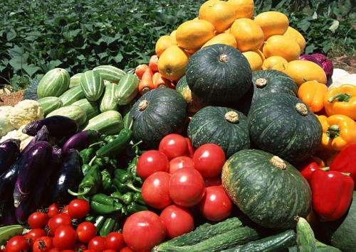 大量北方蔬菜重新进入长沙市场 菜价保持平稳
