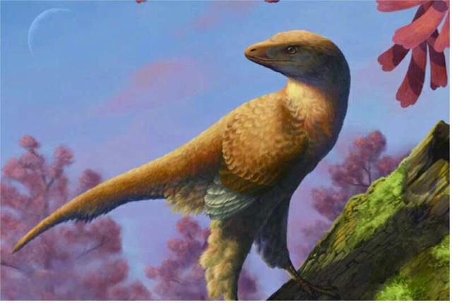 辽西化石回辽宁  被辽宁古生物博物馆收藏