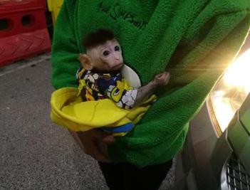 夫妻抓景区猕猴当宠物 法院已对二人提起公诉