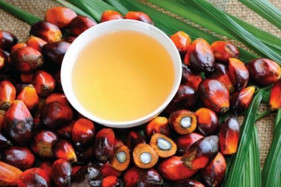 因交易商预期棕榈油产量将下降 棕榈油期货反弹