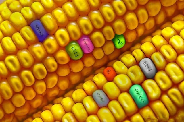 今日(2018年1月23日)全国玉米市场最新价格