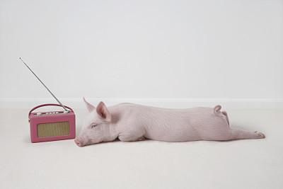 北方杀年猪开启带动需求上升 后期猪肉或有上涨机会