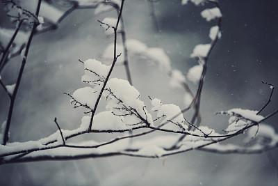 瑞雪难兆丰年 雨雪冷空气威胁油菜成活率