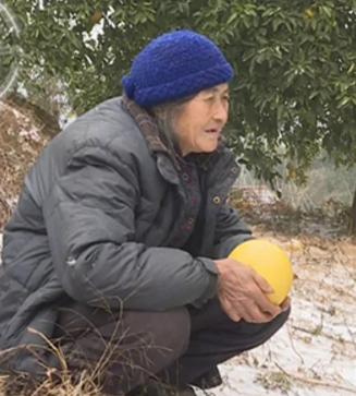 老太卖柚子救外孙女 孙女不幸患上白血病