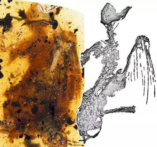 琥珀中发现最完整古鸟 距今约一亿年