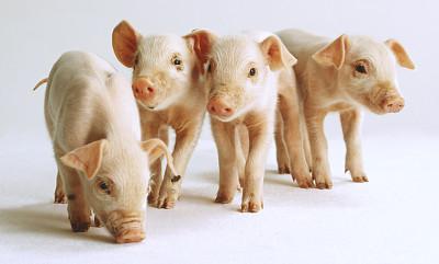 大商所:完善期货市场品种体系 生猪期货正式获批