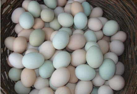 鸡蛋里面有什么