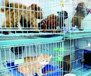 春节宠物寄养火爆 七天能赚一个月工资