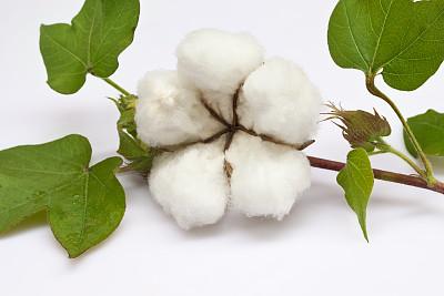 棉花供过于求局势改善 期货跌势有望终止