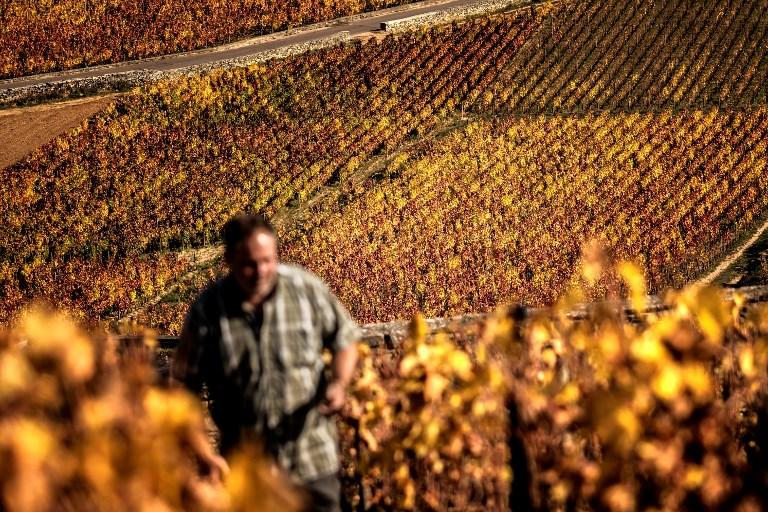 法国葡萄酒及烈酒出口再创新高 归功于干邑出口额的上升及中美两大市场的强劲增长势头