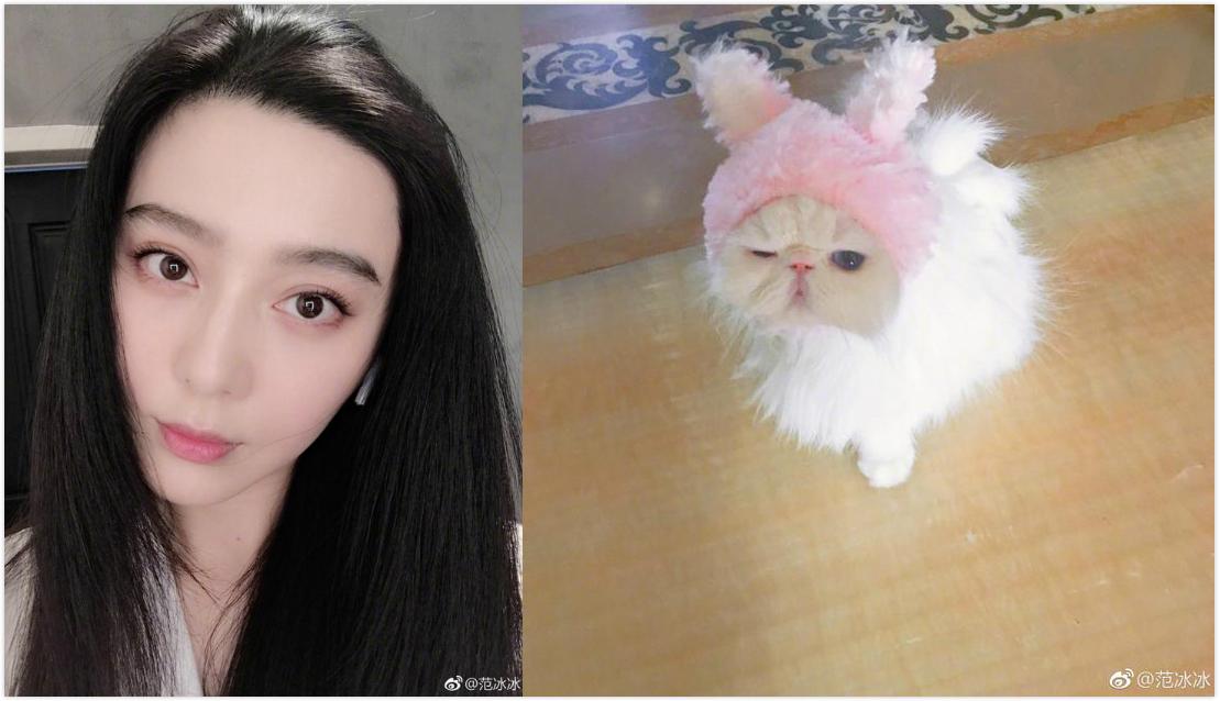 范冰冰晒素颜照和猫比美:我和我妹