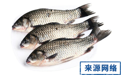 鱼刺卡住喉咙要如何急救 喉咙被鱼刺卡住了要怎么办 喉咙卡到鱼刺要如何处理