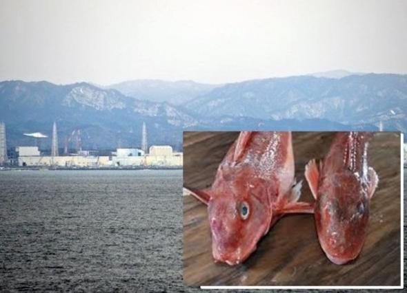 日本现超标辐射鱼 已超出国家标准的2倍
