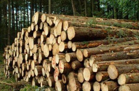 国内木材市场开始回暖 国外却动荡不安