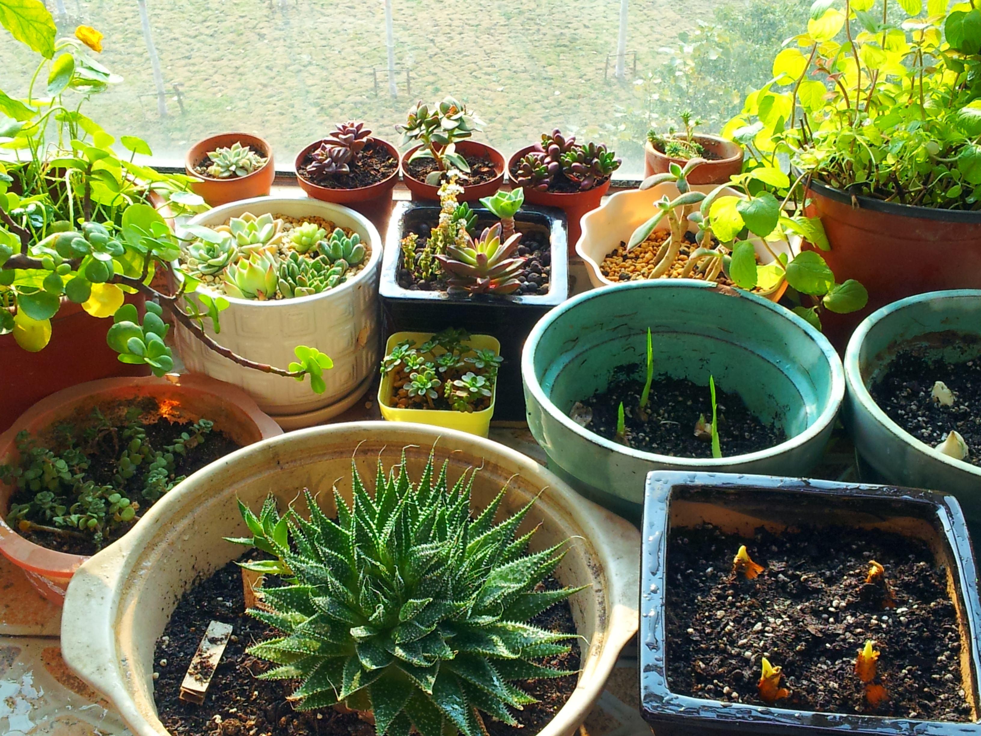 家中摆放植物有什么讲究