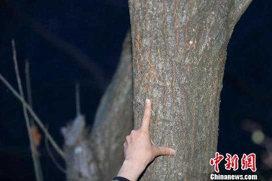 四川现野生大熊猫 活动过的痕迹十分明显
