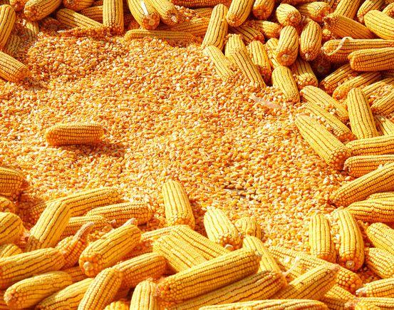 今日(2018年3月14日)玉米市场最新价格