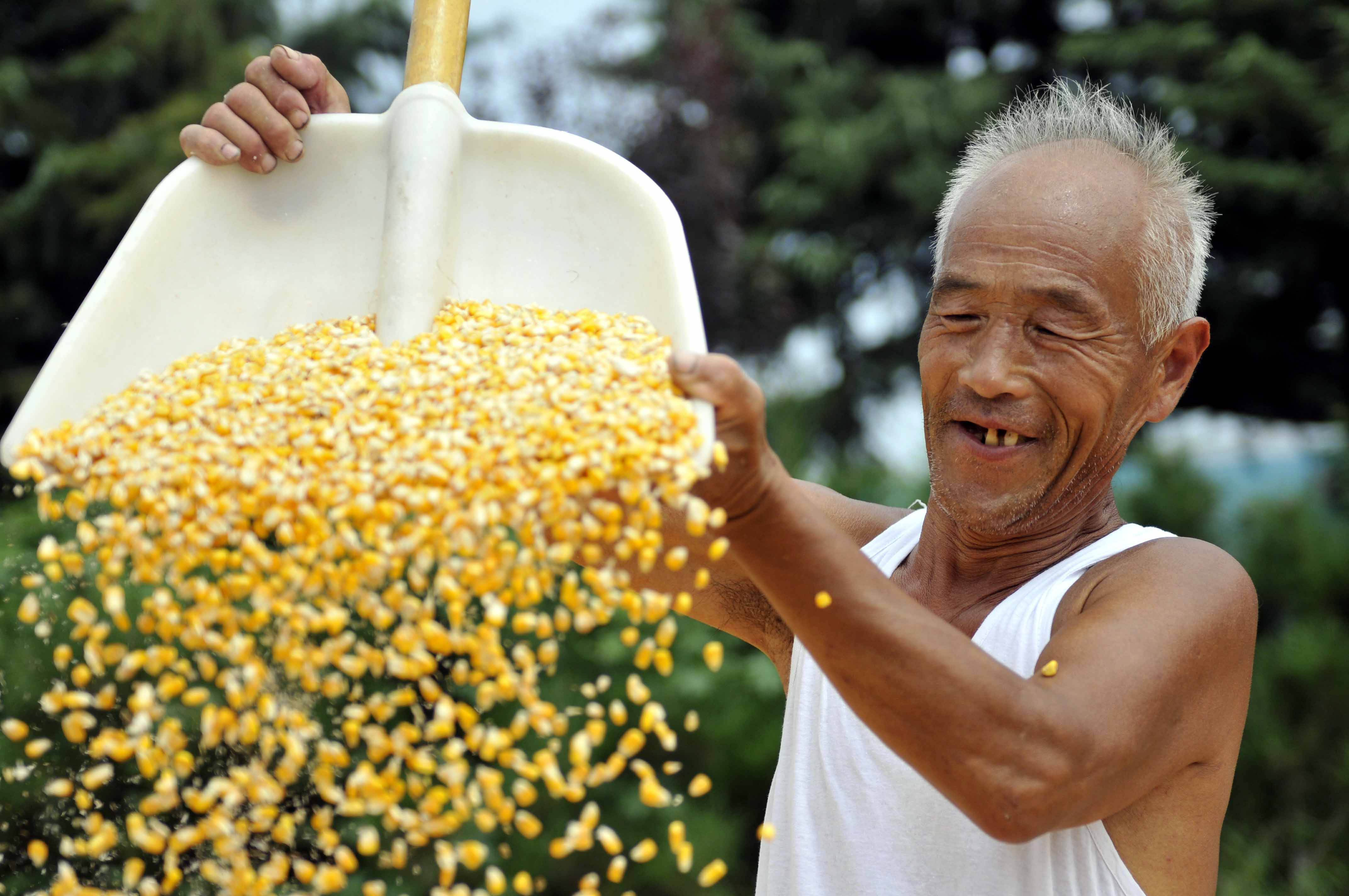 玉米期价止跌企稳 短线继续震荡调整