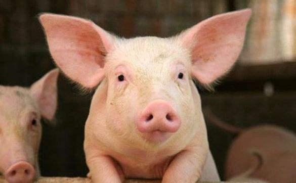 无锡生猪价格大幅下跌 月中已跌破6元大关