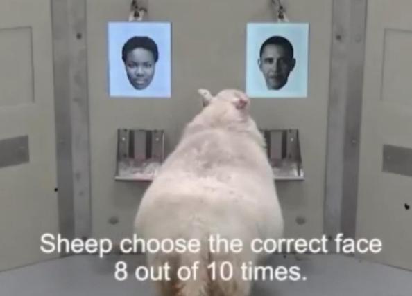 科学揭秘羊脸人身 技术真正能实际应用还要闯关