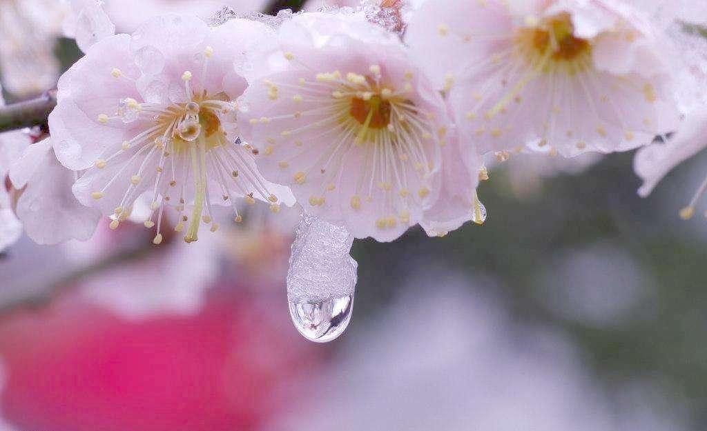 上海欣赏梅花的四个好去处