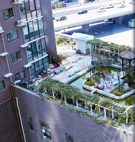 90后夫妻楼顶建花园 律师却称没经过审批的建筑都属违建