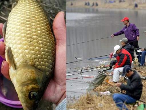 众人排队抢约开河鱼 肉质极为鲜美滑嫩营养价值极高