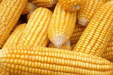 玉米期货产品如何购买