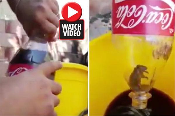 可口可乐惊现死老鼠 实在是太令人恶心反胃