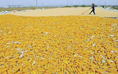 玉米期货如何买