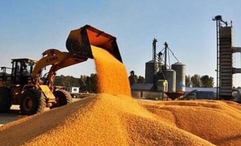 4月12日将启动国家临储玉米竞价销售