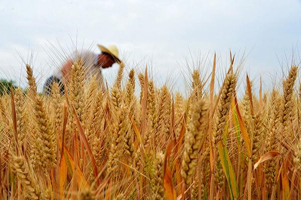 """农业智慧供应链才是破解""""三农""""问题的最佳路径"""