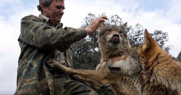 西班牙男子与狼生活12载 称最幸福的日子是与它们生活在一起