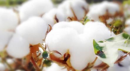 4月9日进口棉花价格小幅上调
