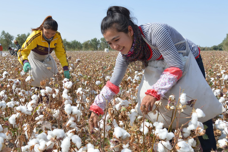 美国对棉类和化纤类服装的进口份额转变明显