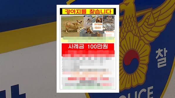韩女子悬赏百万找柯基 作案嫌疑已把狗狗勒死并做成狗肉