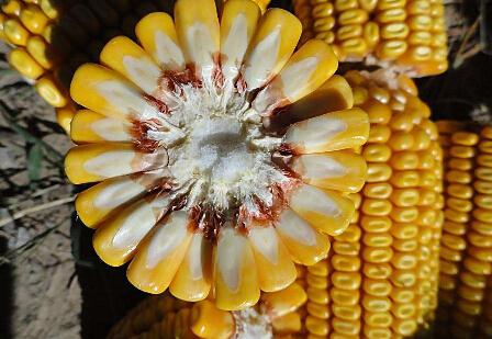 玉米期货如何操作