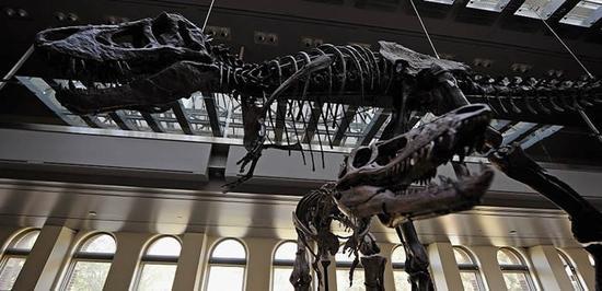 新种恐龙化石定于今年6月在巴黎拍卖