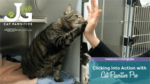 美国发起猫咪击掌活动 帮助它们更快找到新主人