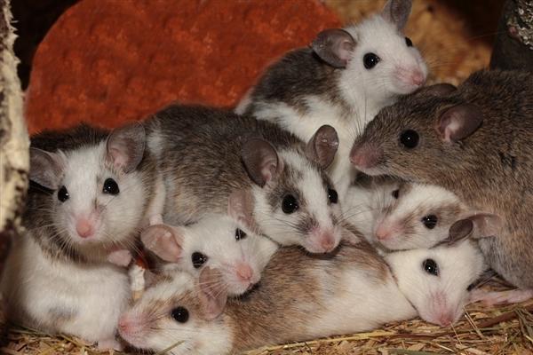 印度数千老鼠掏空地基 这是怎么一回事?