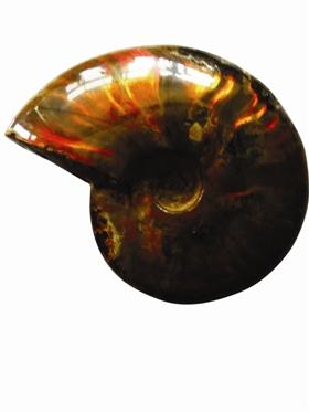 趣味化石收藏