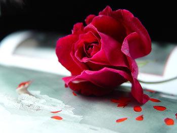 玫瑰精油的功效与用法