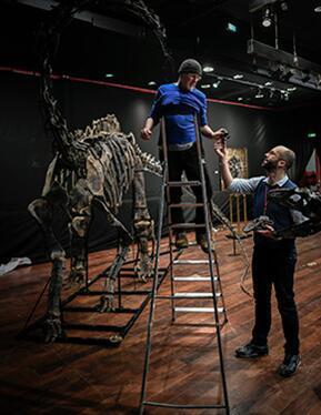 买家以超过140万欧元拍走两具恐龙骨架化石