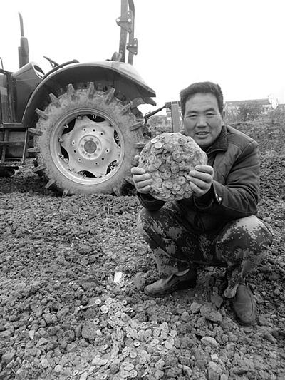 南京农田里耕出万枚古钱币 专家称并不值钱