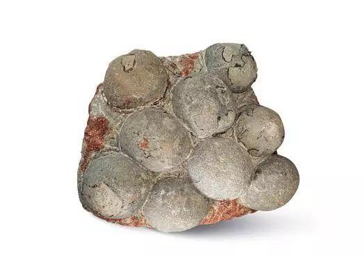 恐龙蛋化石值多少钱?