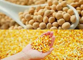 """减玉米增大豆""""百利无害"""" 逐步削减进口大豆依赖性"""