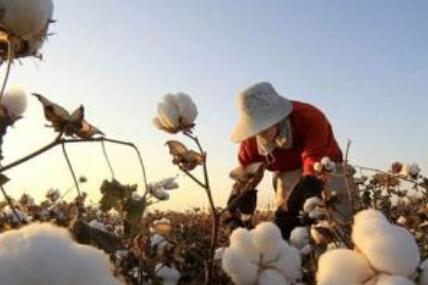 储备地产棉成交量回升 历史有何相似?