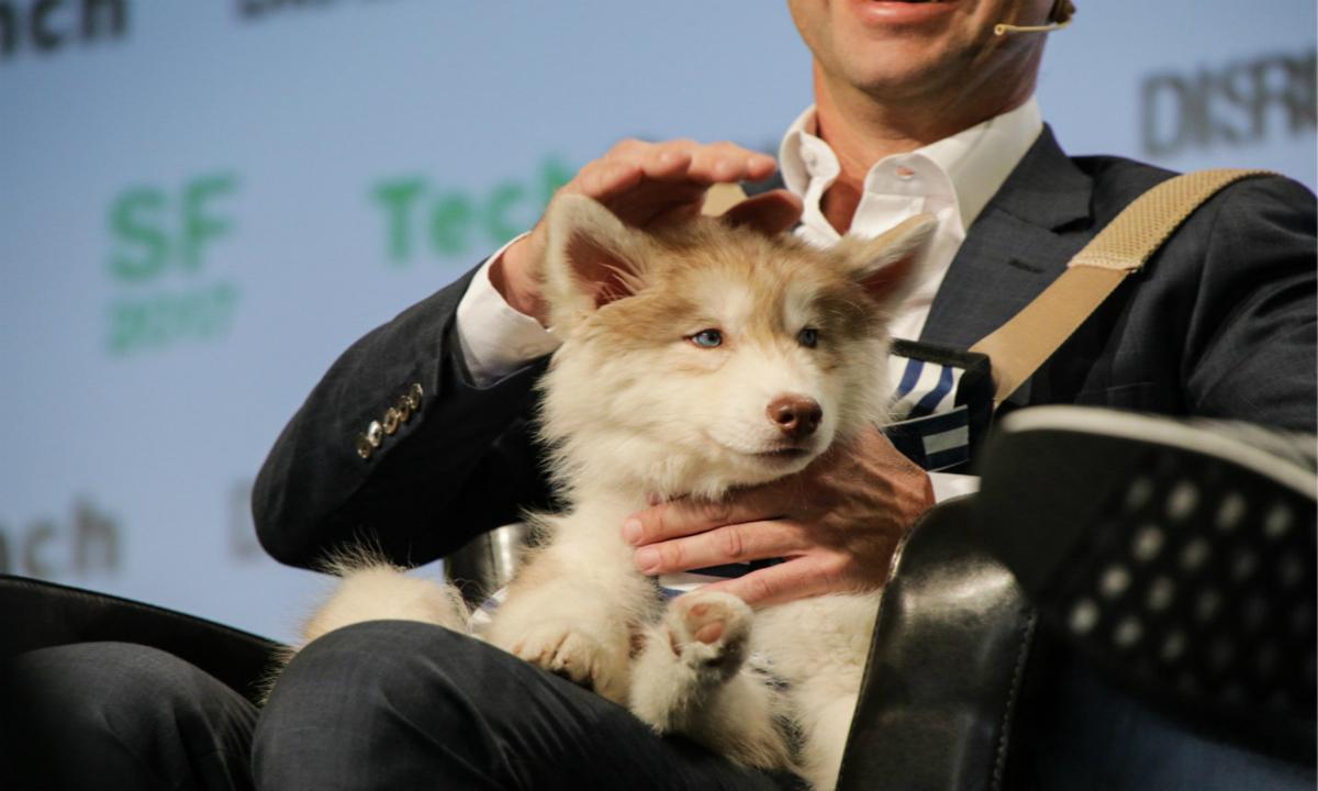 遛狗和狗狗登机服务公司 Rover完成1.55亿美元新一轮融资