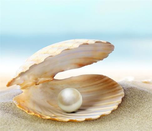人保财险为11个珍珠养殖企业和养殖户签发了保险单