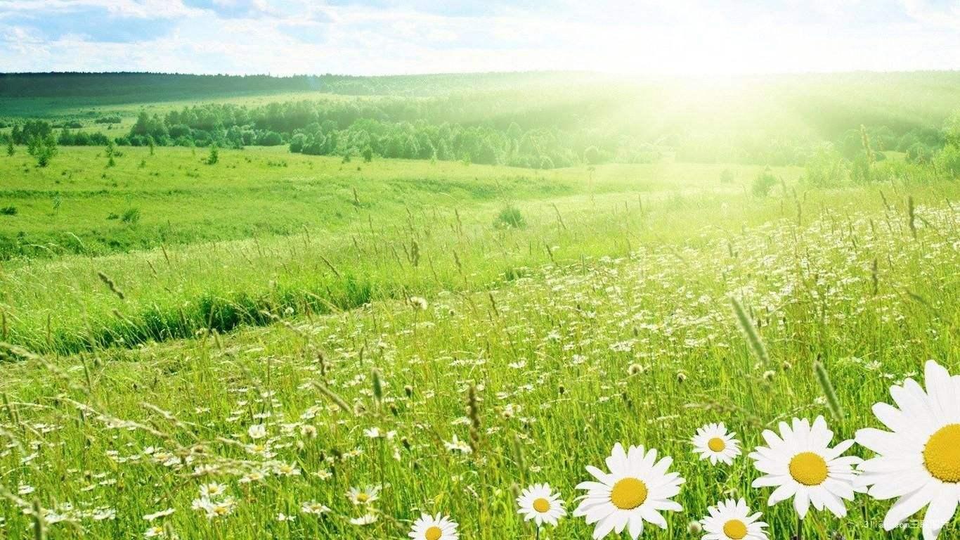 夏天养生主要是养什么?